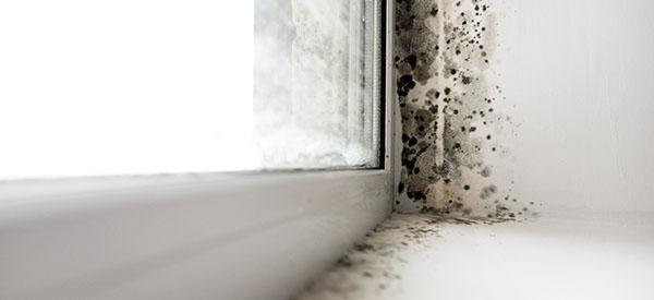 Les moisissures sont des éléments naturels dans l'environnement, mais des intrus indésirables dans votre maison